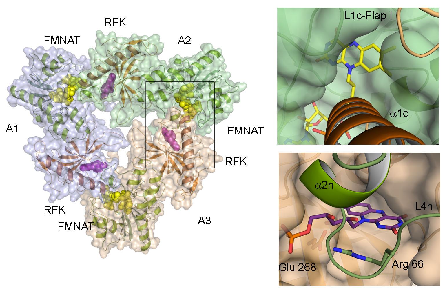 fig-2-mmedina